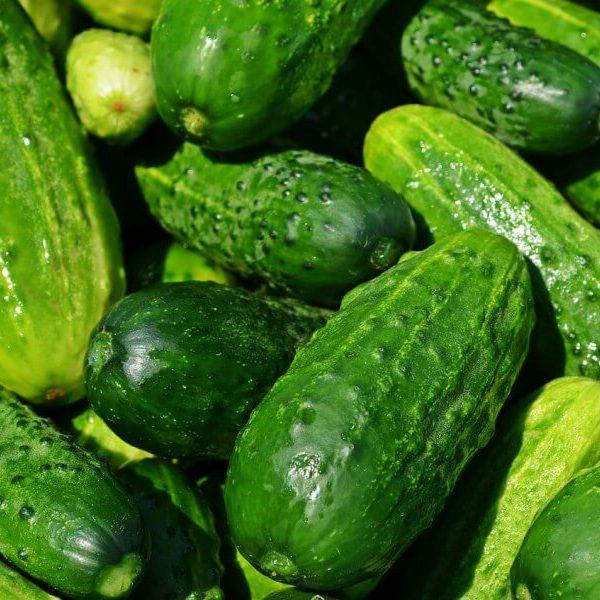cucumbers-849269_1280-1-1