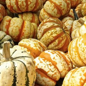 pumpkin-441203_1280