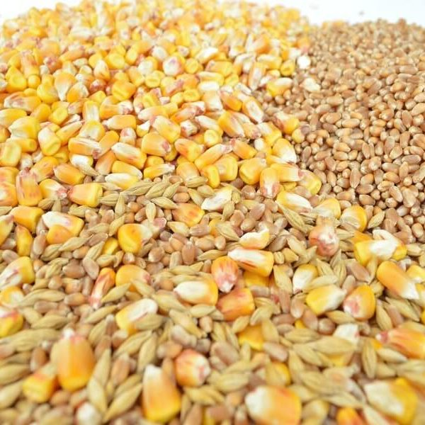 rsz_barley-wheat